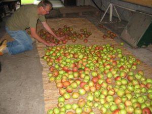 Recreatieboerderij 'aan het Voetpad' herfst2-300x225
