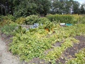 Recreatieboerderij 'aan het Voetpad' 0